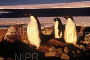 NIPR_007438.jpg