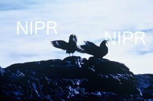 NIPR_007450.jpg
