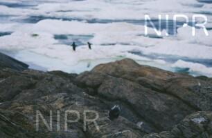 NIPR_008899.jpg