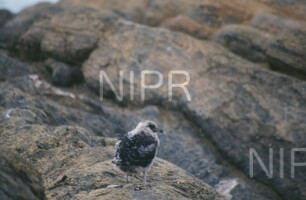 NIPR_008900.jpg