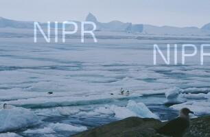 NIPR_008904.jpg