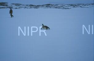 NIPR_009261.jpg