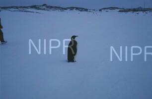 NIPR_009262.jpg