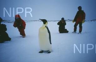 NIPR_009264.jpg