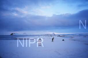 NIPR_009450.jpg