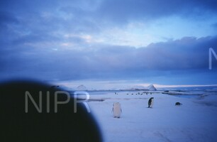 NIPR_009453.jpg