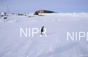 NIPR_011195.jpg