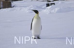 NIPR_011198.jpg