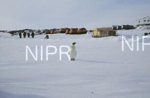 NIPR_011200.jpg