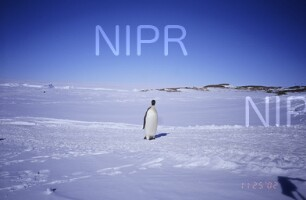 NIPR_011364.jpg