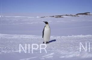 NIPR_011365.jpg