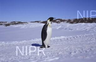 NIPR_011367.jpg