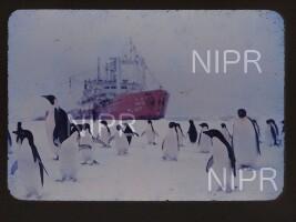 NIPR_011934.jpg