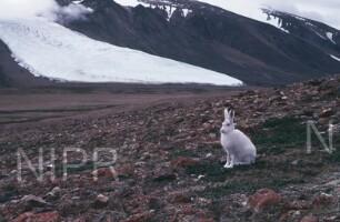 NIPR_012637.jpg