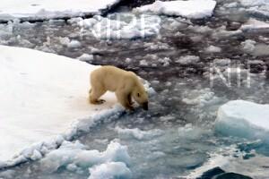 NIPR_013354.jpg