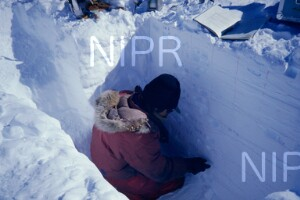 NIPR_013553.jpg
