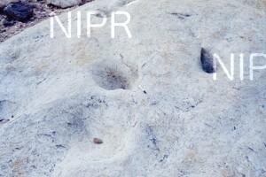NIPR_013738.jpg