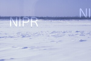 NIPR_014015.jpg
