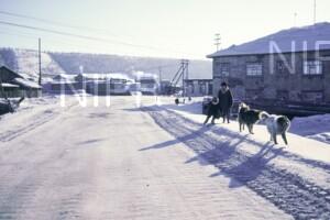 NIPR_014029.jpg