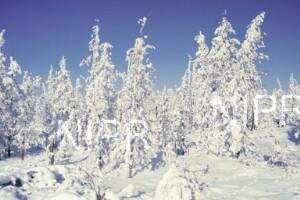 NIPR_014030.jpg