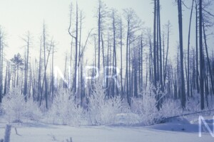 NIPR_014071.jpg