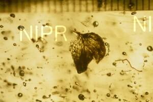 NIPR_014230.jpg
