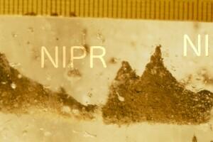 NIPR_014232.jpg