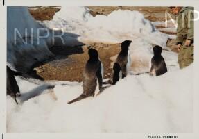 NIPR_014536.jpg