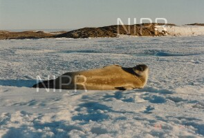 NIPR_014818.jpg