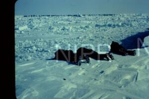 NIPR_014842.jpg