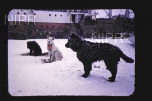NIPR_015117.jpg