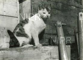 NIPR_015319.jpg