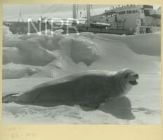 NIPR_015361.jpg