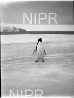 NIPR_016105.jpg