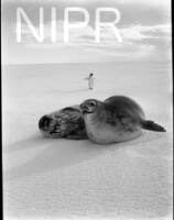 NIPR_016263.jpg
