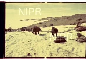 NIPR_016470.jpg