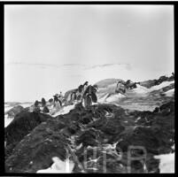 NIPR_016924.jpg