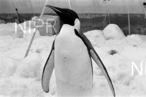 NIPR_017105.jpg