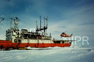 NIPR_017344.jpg