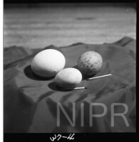NIPR_017665.jpg
