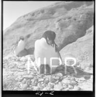 NIPR_017703.jpg