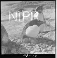 NIPR_017706.jpg