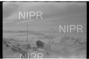 NIPR_017884.jpg