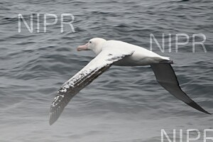 NIPR_050021.jpg