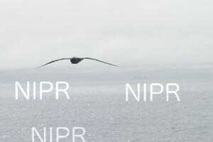 NIPR_060067.JPG