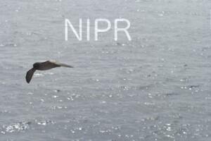 NIPR_060068.JPG