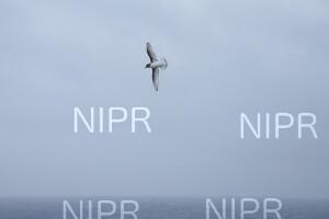 NIPR_060091.JPG