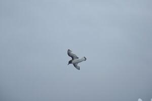 NIPR_060095.JPG
