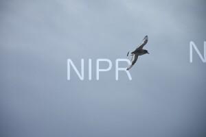 NIPR_060096.JPG
