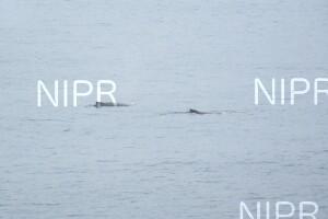 NIPR_060104.JPG